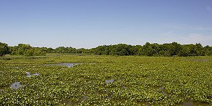 John Heinz National Wildlife Refuge